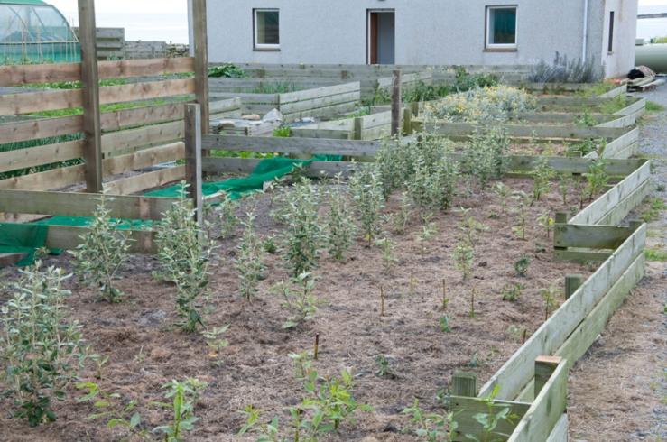 Croft garden shelter belt