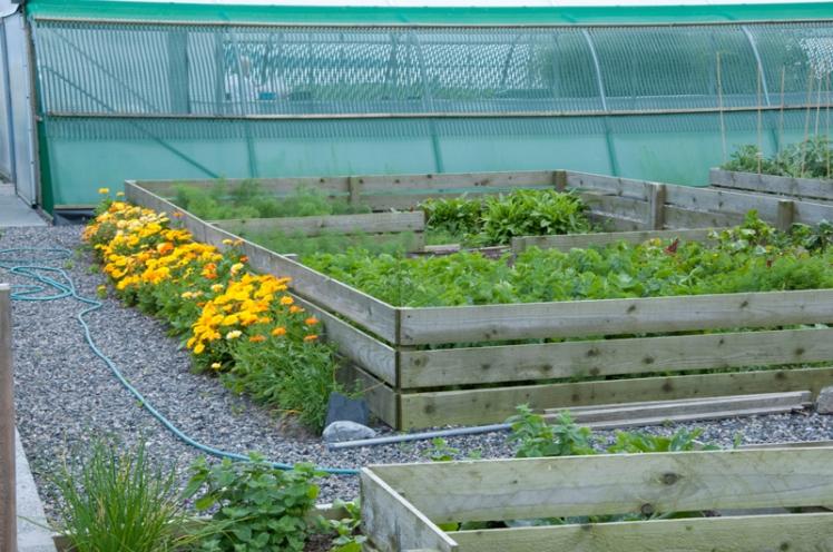 Vegetable plot 2011