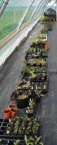 Plants hardening off