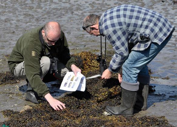 Seaweed Hunt - looking at seaweeds