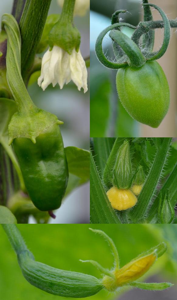 Croft Garden Vegetables