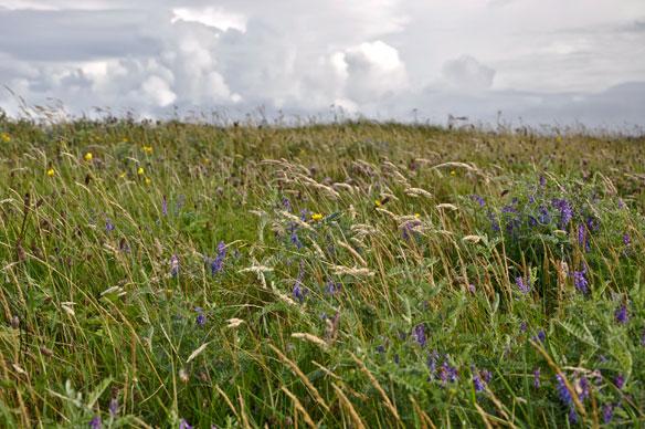 Machair - grassland in the autumn