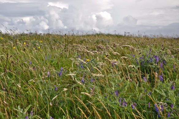 Machair - grassland in the autumn
