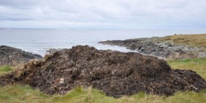 muck heap by the sea