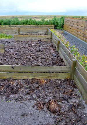 Muck/seaweed on the vegetable beds