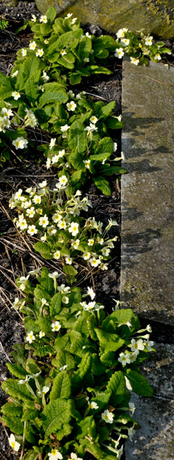 Primroses Croft Garden Cottage