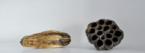 seed-pods