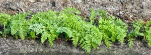 The next generation - early carrots