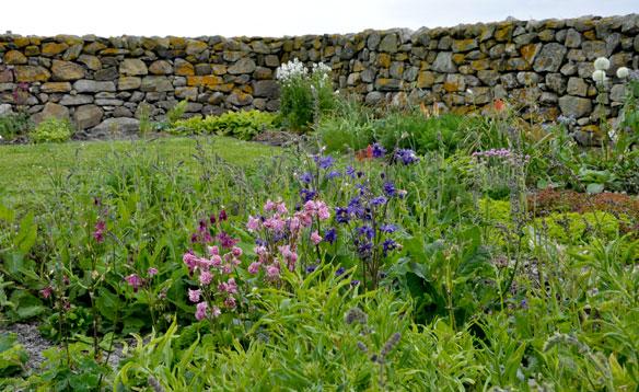 Ardivachar Cottage Garden June 2013