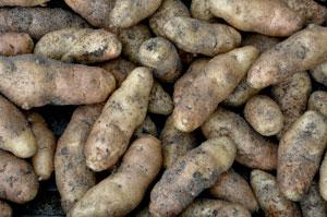 New-Potatoes-Charlotte