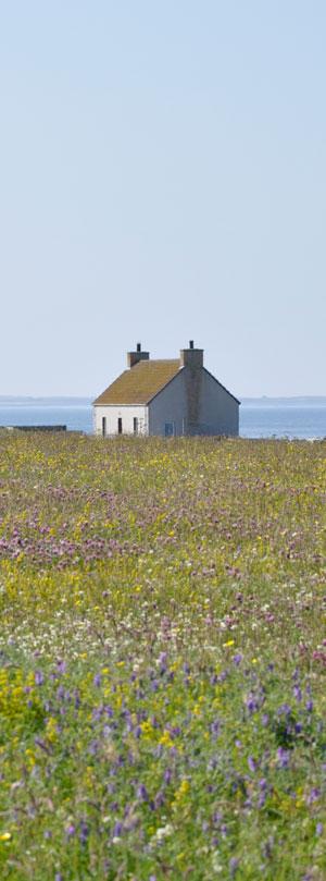 Hebridean summer