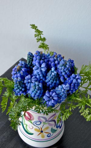 Muscari Blue Magic