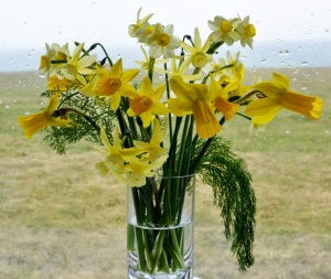 Narcissus: Hawera, Baby Moon, Little Witch, Tete-a -Tete