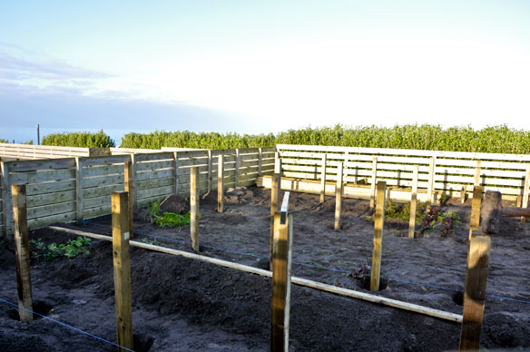 New Orchard Site