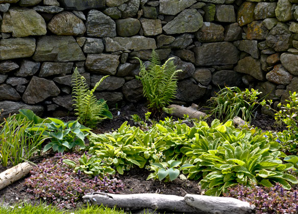 ferns, hostas, primroses and Ajuga