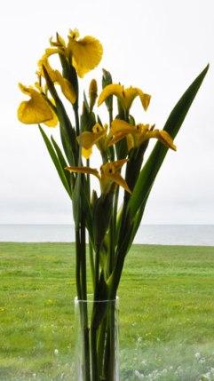 Yellow-Iris-vase