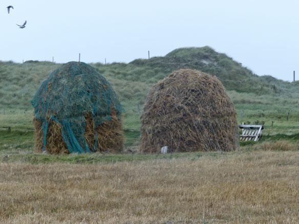 Winter feed - large stooks