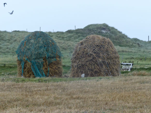 Winter feed - large stooks