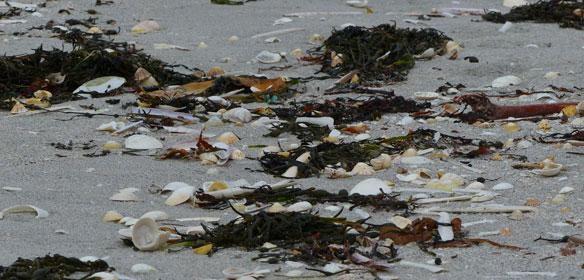 Tide wrack on Eriskay beach