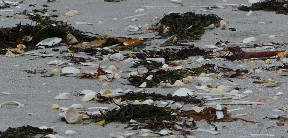 Tide wrack on Eriskay beach