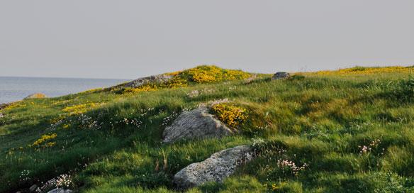 Ardivachar-Headland