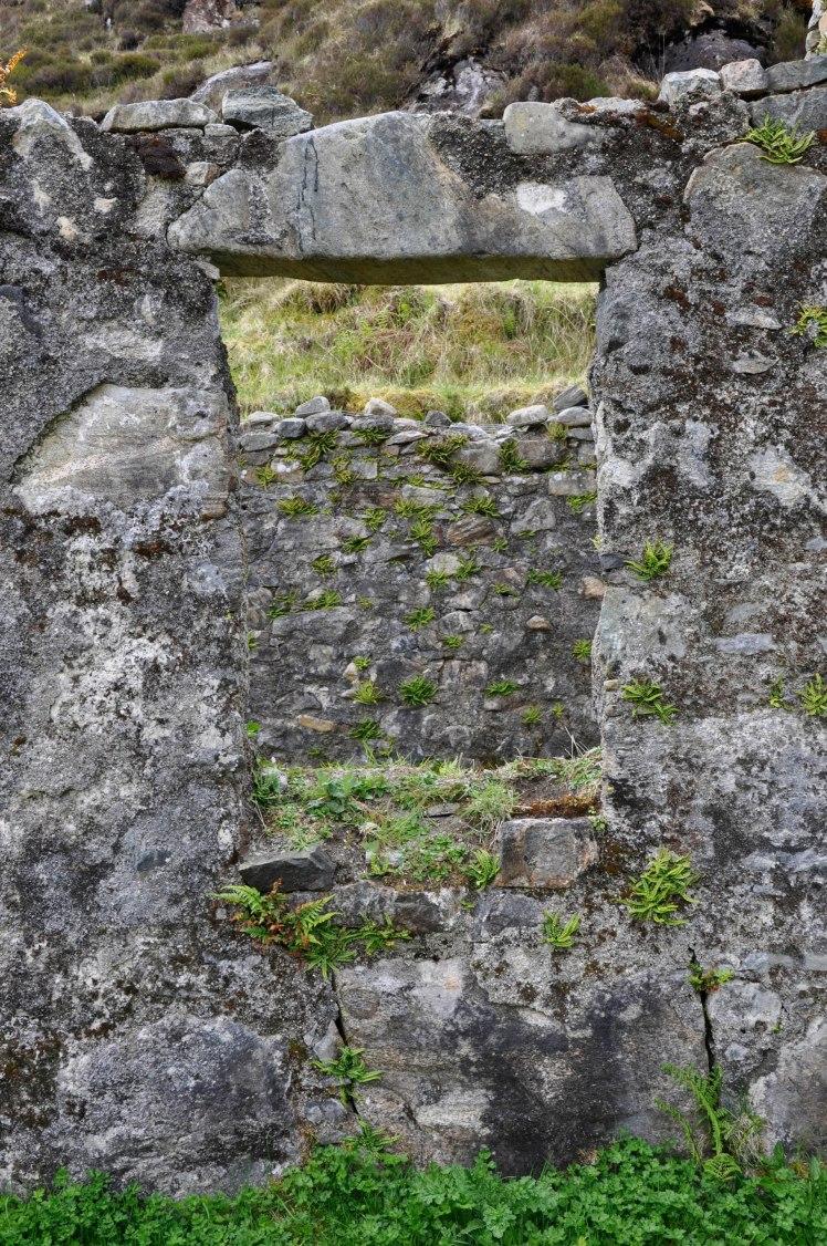Ferns on abandoned black house walls