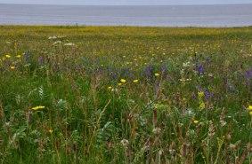 Headland Flora