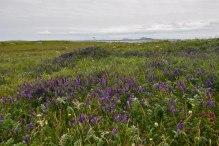 Headland-Flora2-copy