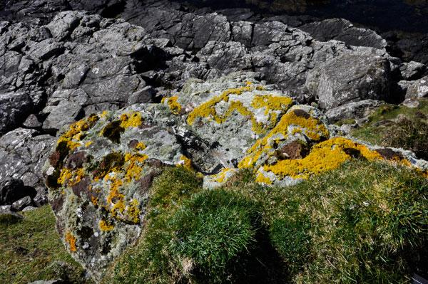 coastal rock outcrop with lichens