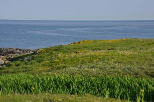 Ardivachar view to west