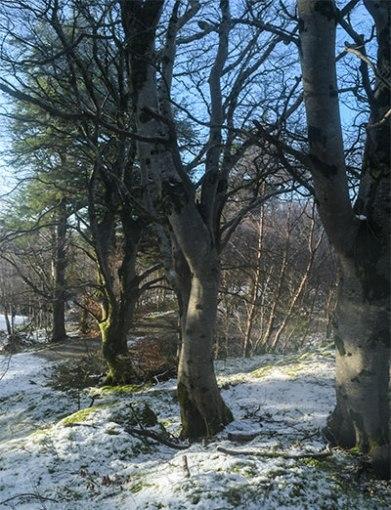 Lews Castle woodland