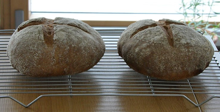Wholemeal sourdough loaves