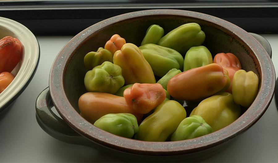 bowl ripening tomatoes